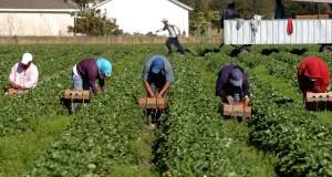 В Финляндии исчезла группа сборщиков ягод из Украины.