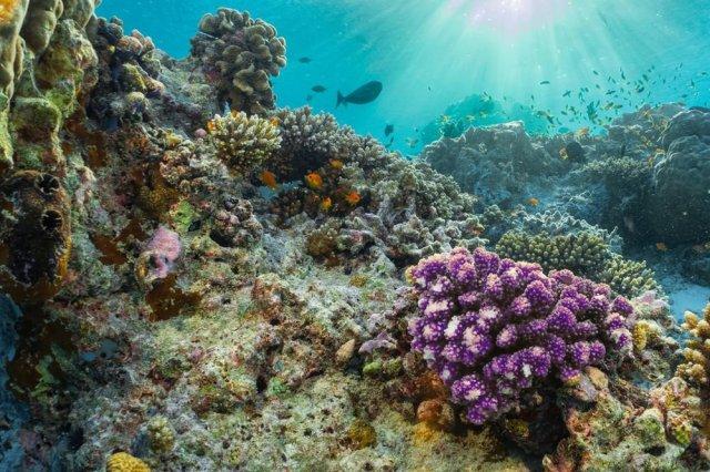 У побережья Италии обнаружили уникальный коралловый риф