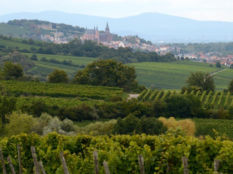 Die Weinbauregionen in Deutschland stehen vor der Aufgabe, ihre jeweiligen Anforderungen für Qualitätsweine neu zu bestimmen. Foto: Roland Holschneider/dpa