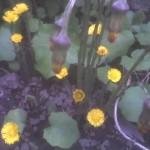 flori de potbal 3
