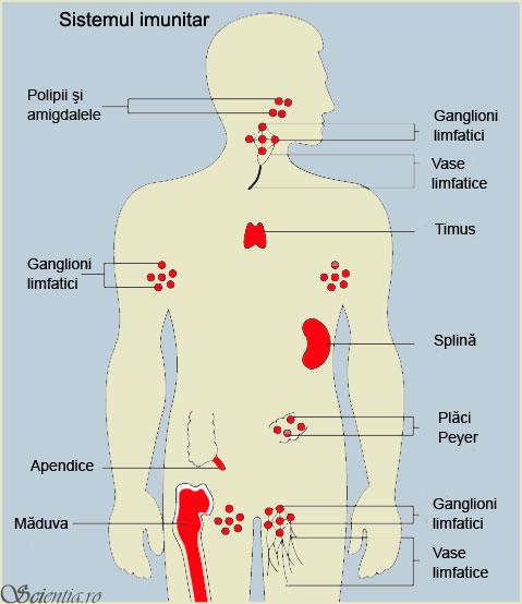 sistem inmunitar