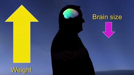 Otak(3)