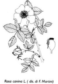 orto_botanico2-199x290