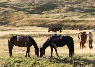 Horses at les Fonts de Cervières