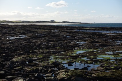 Seahouses rocky coast
