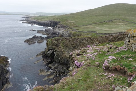 Coast near Sumburgh Head