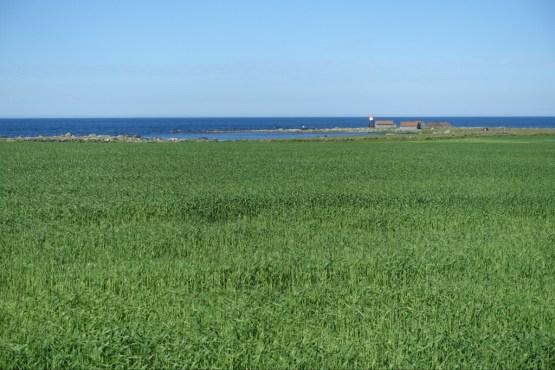 Farm field beside the coast