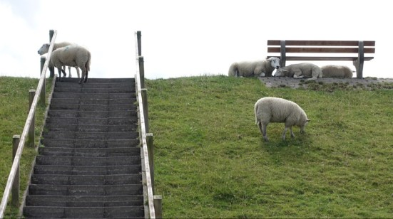 Sheep on top of a dike.