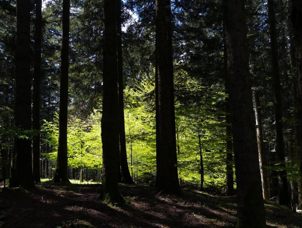 Glowing trees in a dark forest clearing