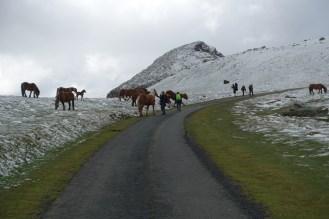 Free range horses along the way