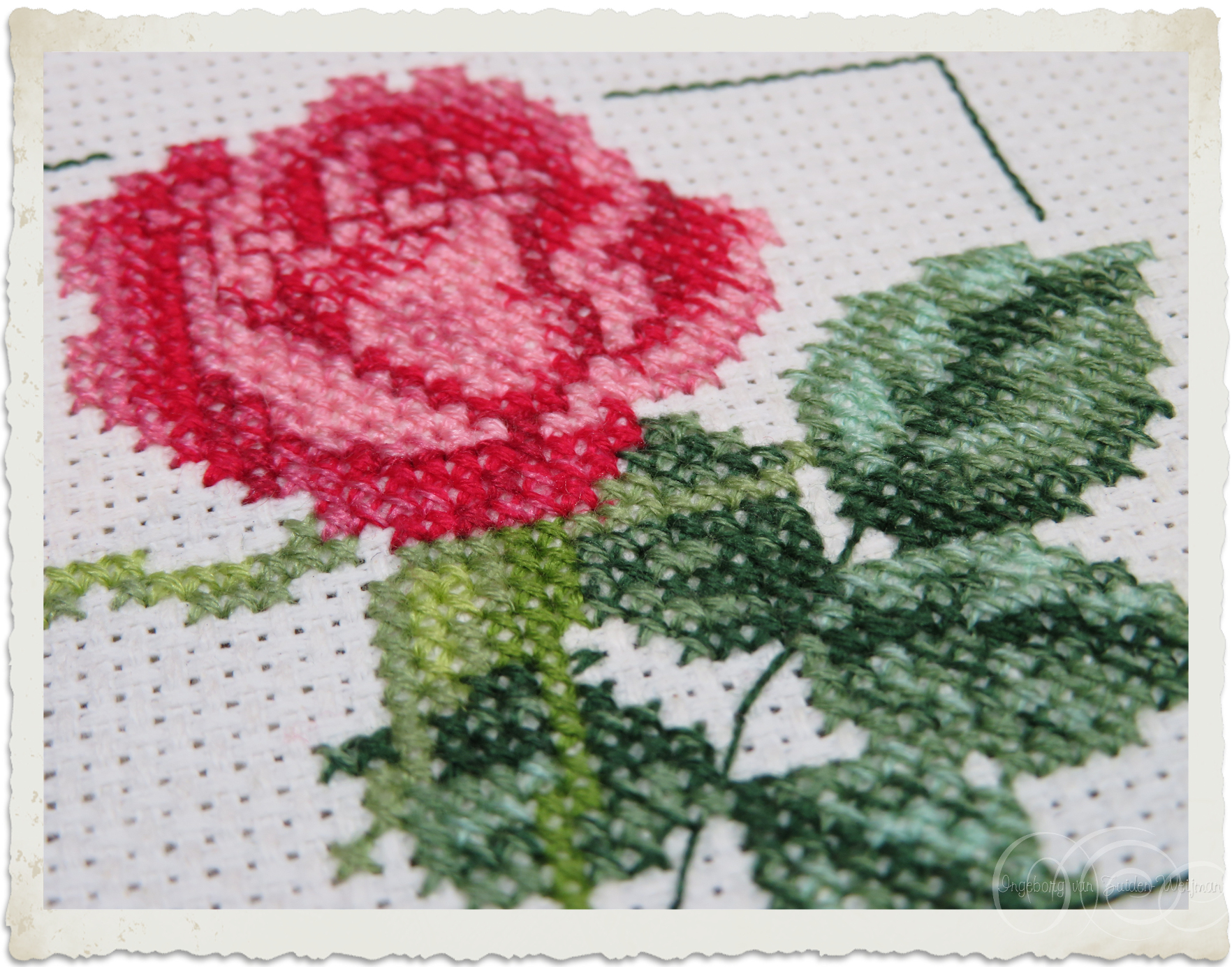 Red Rose in cross-stitch by Ingeborg van Zuiden