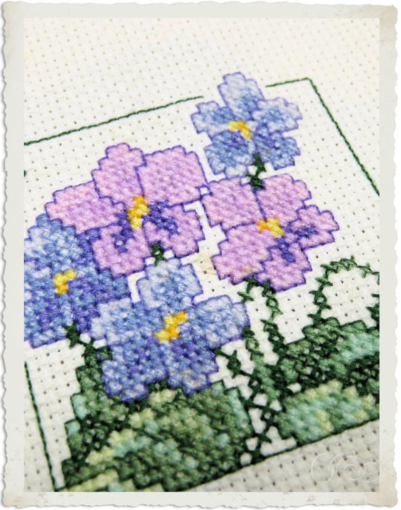 Carolyn's garden violets