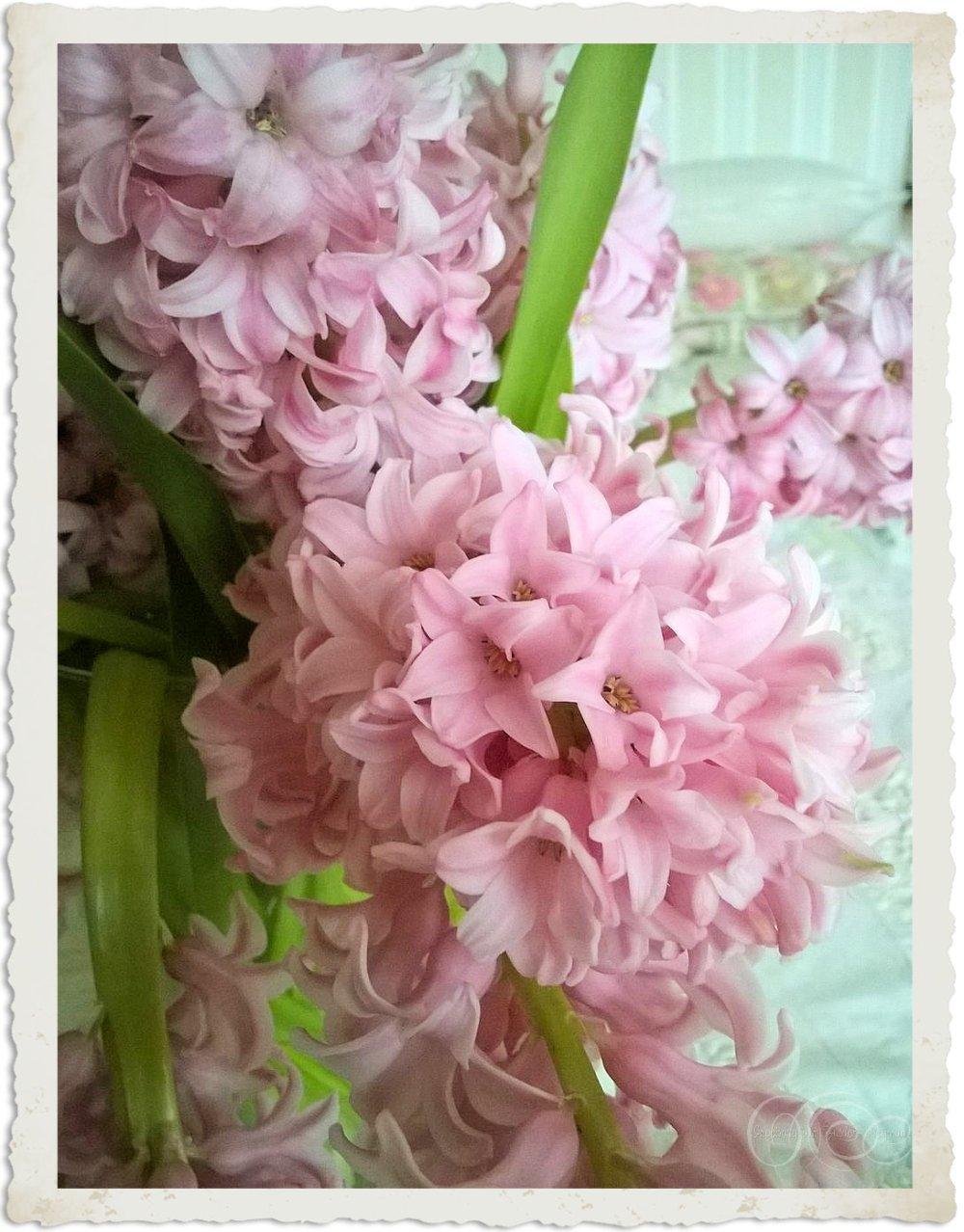 Pretty pink spring