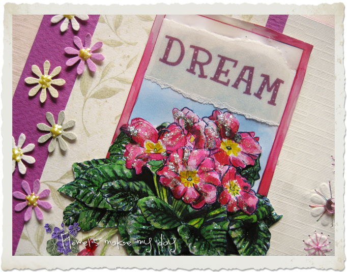 Dream primula flowers on a card