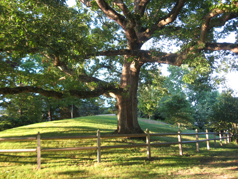 Wilcox Park ~ 7.27.11 ~ Westerly, Rhode Island