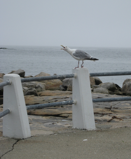 8.27.11 ~ Eastern Point