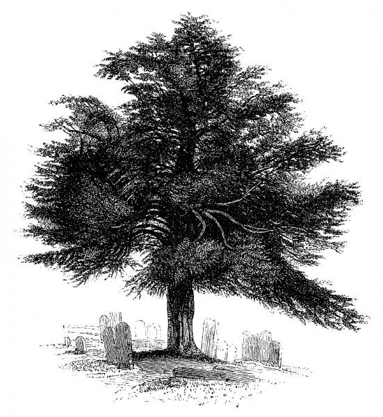 tree.cemetery