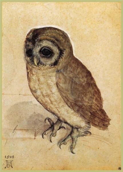 """""""The Little Owl"""" by Albrecht Dürer (1471-1528) German Artist"""