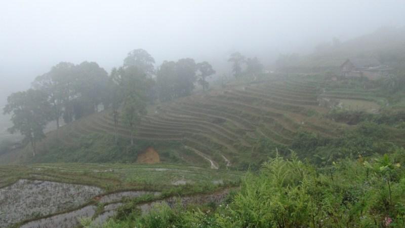 Risplantager så langt øjet rækker, eller disen tillader det!