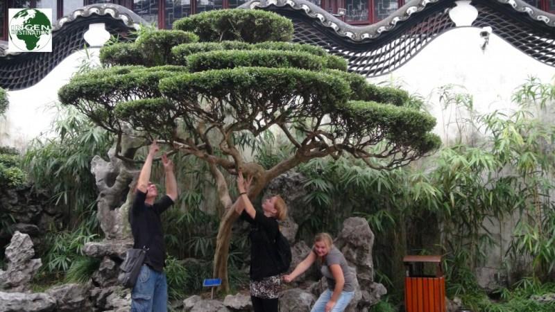 """Trimmer"" bonsai træer!"