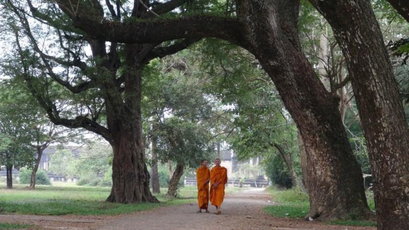 Munke ved Angkor Wat, Siem Reap, Cambodia