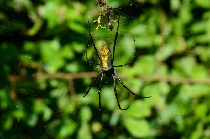 spider, pemba, mozambique