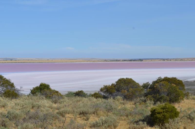 Den flotte saltsø