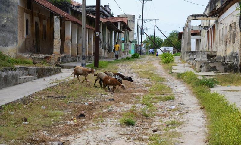 Et par af de heldige geder der ikke er blevet slagtet endnu