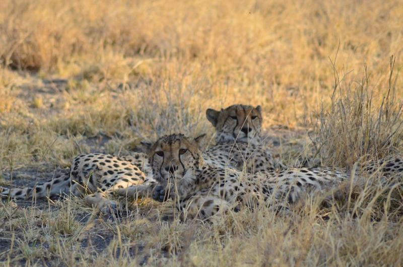 6. Central Kalahari Game Reserve (189)