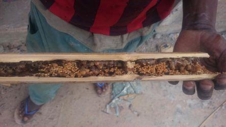 Monjani holdte ramadan indtil han fandt en bambus med honning i. Det kunne han ikke modstå, så han gemte sig og spiste honningen som en anden bjørn
