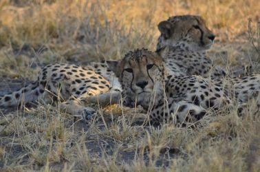 6. Central Kalahari Game Reserve (185)