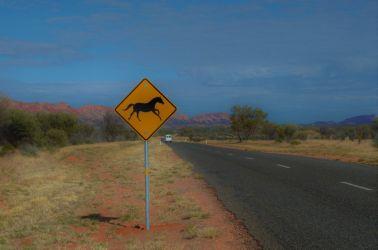 Australien, wilde horses, vilde heste, sign, skilt, vildt