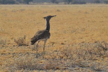 6. Central Kalahari Game Reserve (217)