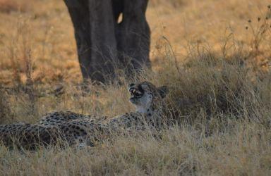 6. Central Kalahari Game Reserve (198)