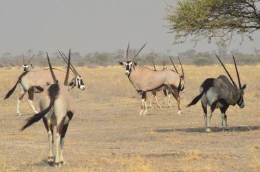 6. Central Kalahari Game Reserve (65)