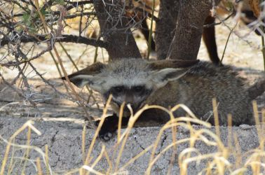 6. Central Kalahari Game Reserve (54)