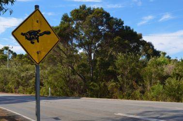 Australien, turtle, skildpadde, sign, skilt, vildt