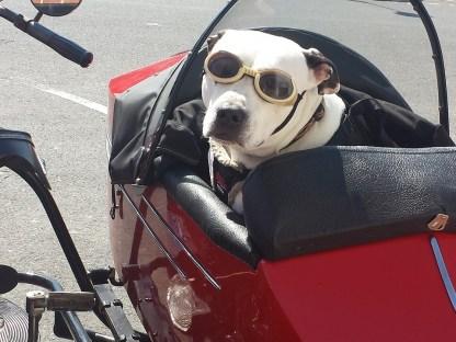 Francia a Inglaterra Ferry Mascotas