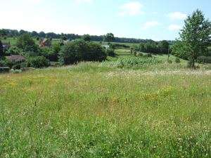 The conservation area of the allotments - a beautiful wildflower meadow.