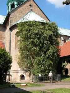 Hildesheim_Rosenstock