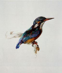 John Ruskin. Kingfisher.