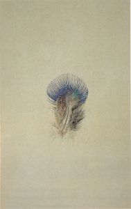 John Ruskin. Study of a Peacock's Breast Feather. 1875. Watercolour, 22.3 x 14.7 cm.