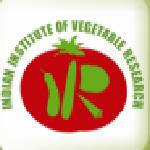 IIVR Recruitment 2017-18 Young Professional 21 vacancies