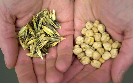 seed10.jpg, Svalbard Global Seed Vault, Seed conservation, Global Seed Vault, agricultural conservation, agricultural facility, norway seed facility, norway seed vault, svalbard seeds, seed protection