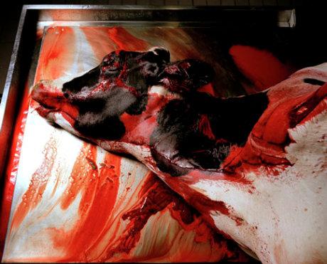 Imagen de la serie sobre Caravaggio de Anoush y Aimée