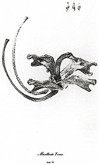 Imagen de Corte de Florero de J.M. Echavarría