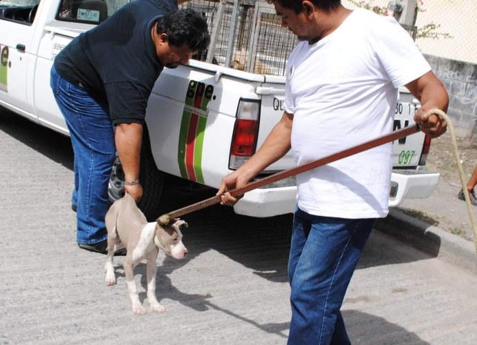 recogida perro