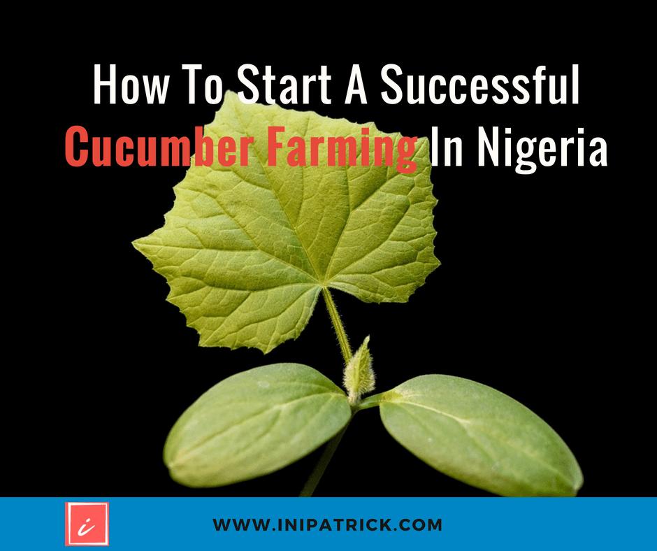 How To Start A Successful Cucumber Farming In Nigeria