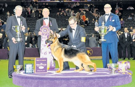 Largest Dog Show In The US – Westminster Dog Show 2017