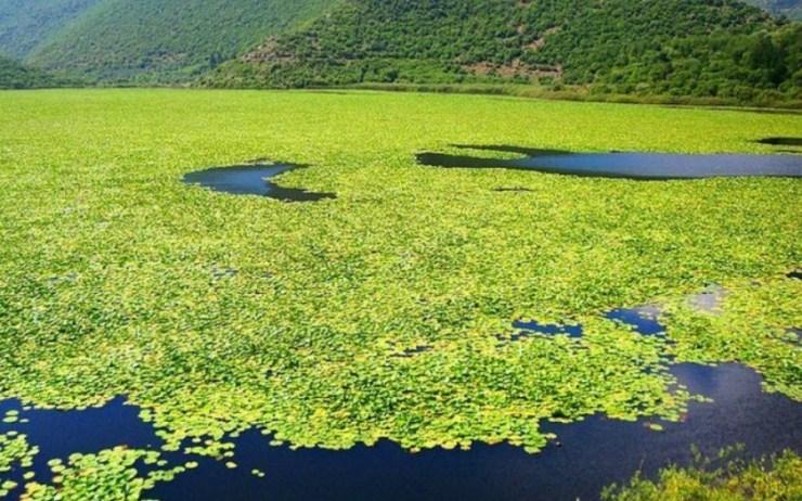 Τοπίο εκπληκτικής ομορφιάς!Η παραμυθένια λίμνη με τα νούφαρα στην Ελλάδα που…δεν θυμίζει Ελλάδα!